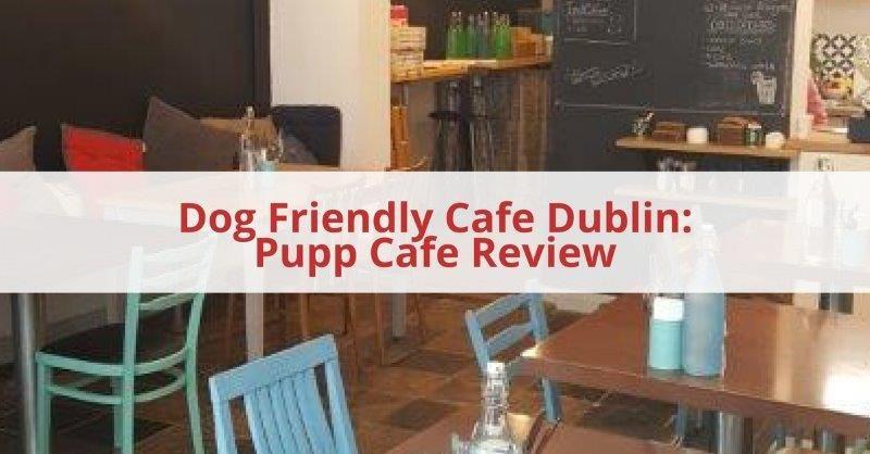 Dog Friendly Cafe Dublin