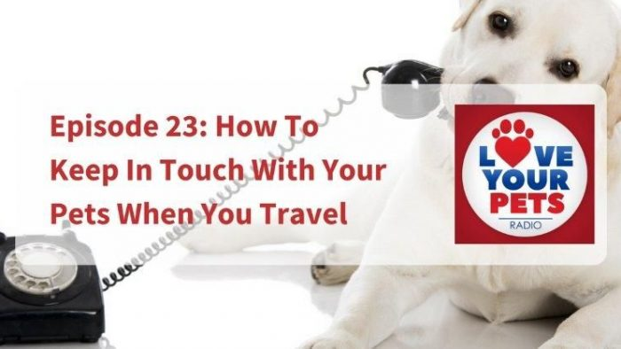 How To Keep In Touch With Your Pets When You Travel