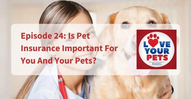 Is Pet Insurance Important