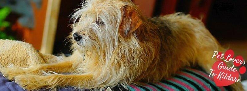 Kildare Dog Boarding Kennels