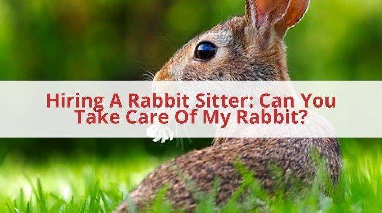 Rabbit Sitter