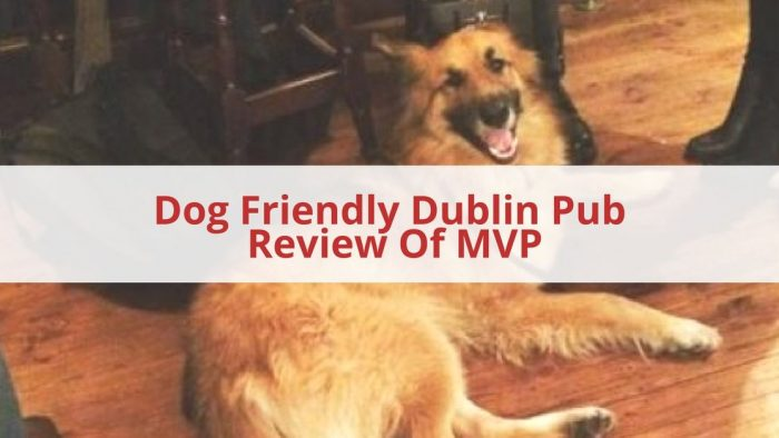 Dog Friendly Dublin Pub