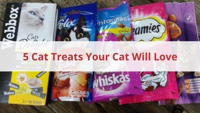 5 Cat Treats Your Cat Will Love