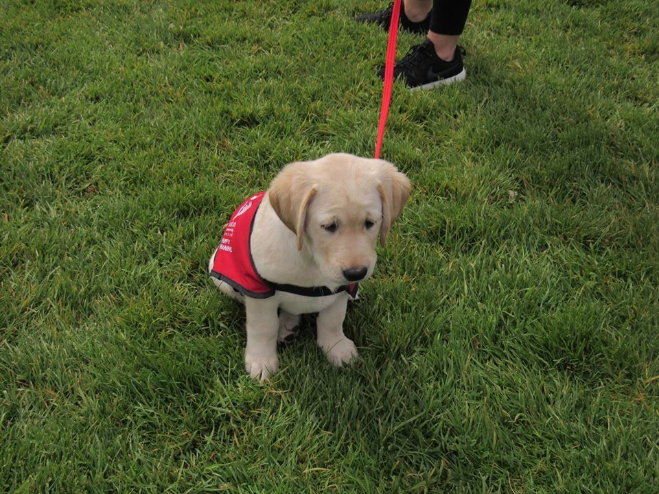How To Get An Autism Assistance Dog