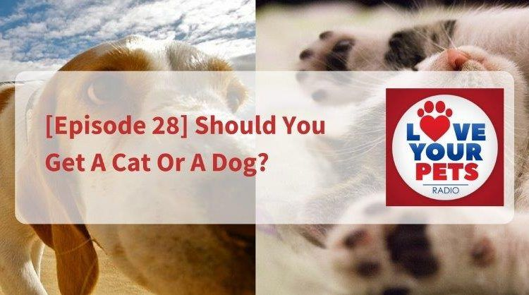 Should You Get A Cat Or A Dog