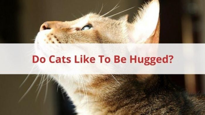 Do Cats Like To Be Hugged