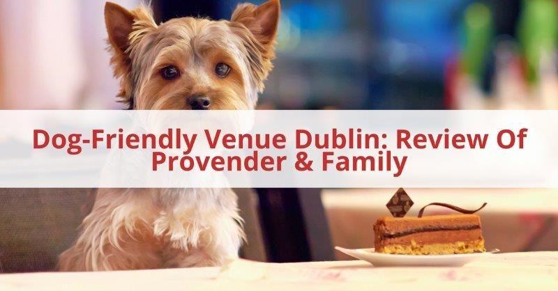Dog Friendly Venue Dublin