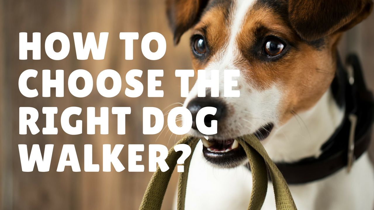 How To Choose The Right Dog Walker