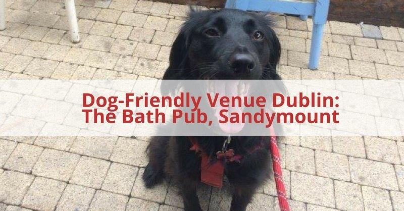 Bath Pub Dog Friendly Pub