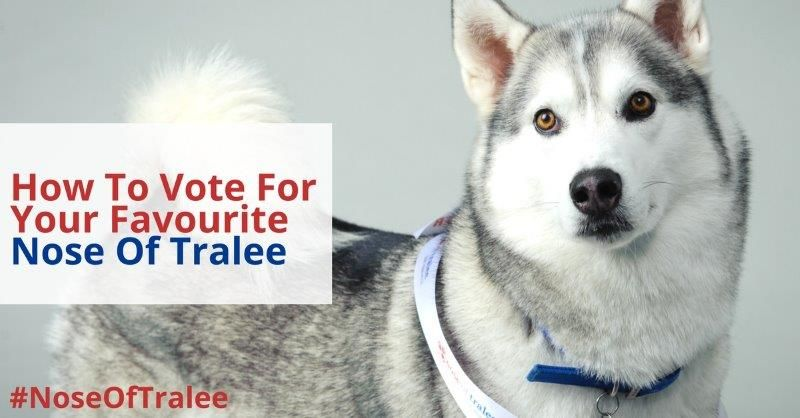 How To Vote Nose Of Tralee