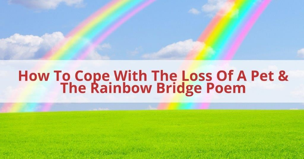 How To Cope With The Loss Of A Pet The Rainbow Bridge Poem
