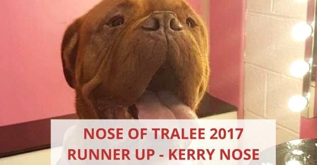 Nose Of Tralee 2017 Runner Up