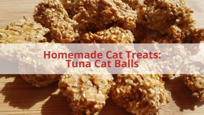 tuna homemade cat treats