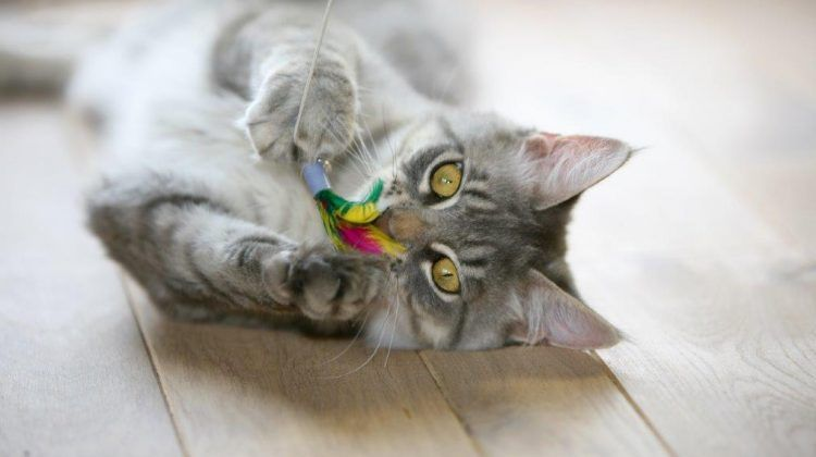 Should I Get A Kitten
