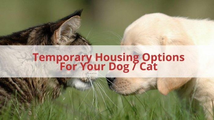 Temporary Housing For Your Dog