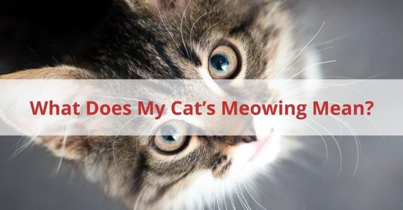 when do male cats stop spraying