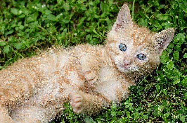 Kitten Checklist