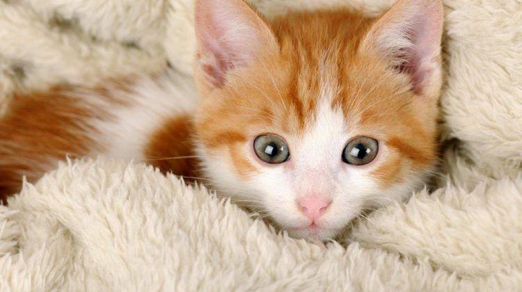 Unique Kitten Names