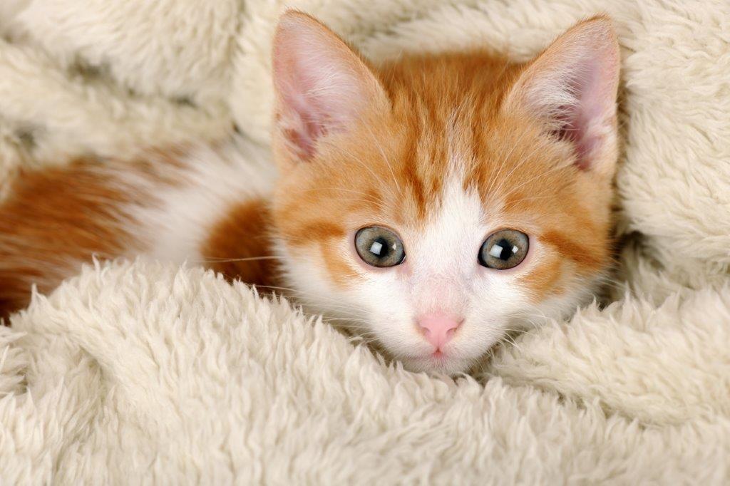 Best Cute Cat Names For Kittens 2019 Unique Adorable