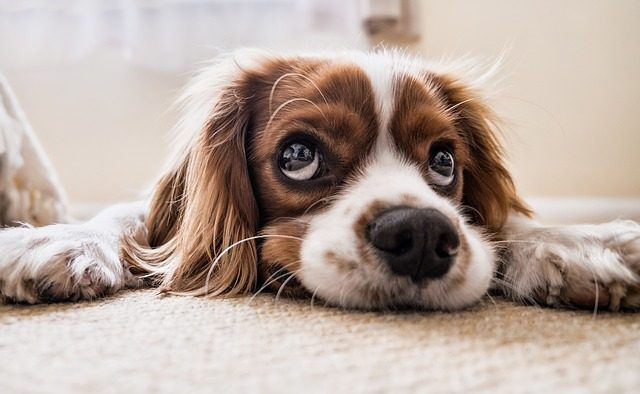Unique Puppy Names