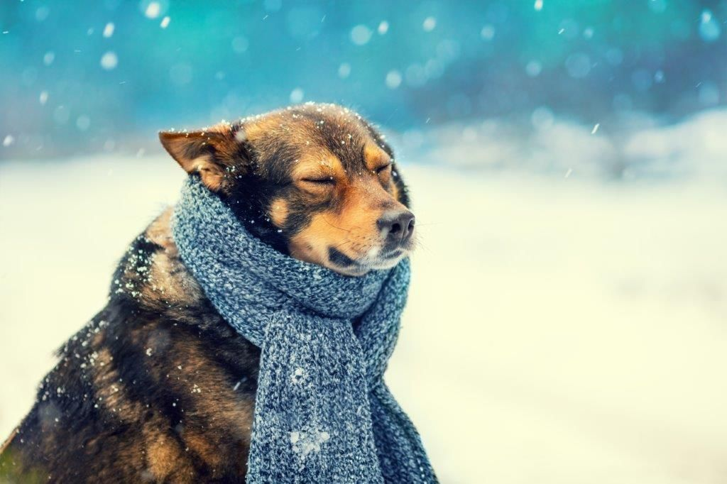 Winter Safety Tips For Pet Owners