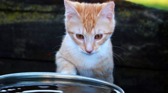 Kitten with water