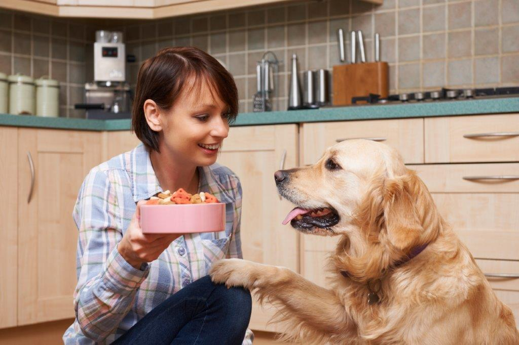 Work With Pet Sitters Ireland: Pet Sitting & Dog Walking Services