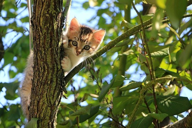 When Should You Let Your Kitten Outside Is It Too Soon To Let Them Out