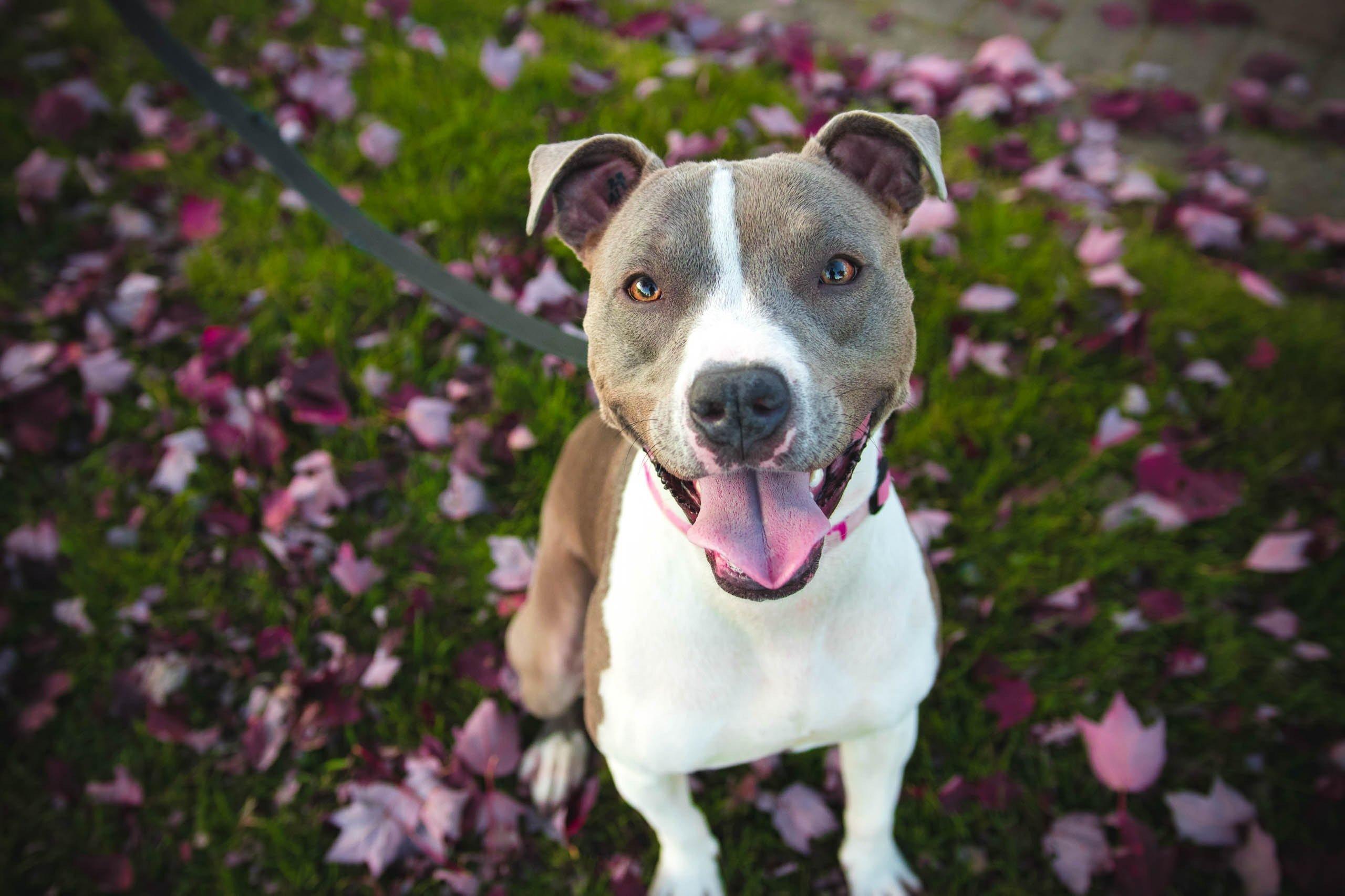 Rathfarnham Pet Sitter Dog Walker