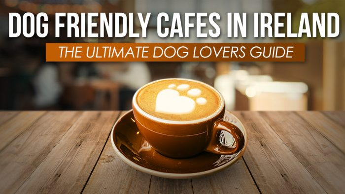 Dog Friendly Ireland