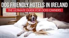 Dog Friendly Hotels Ireland