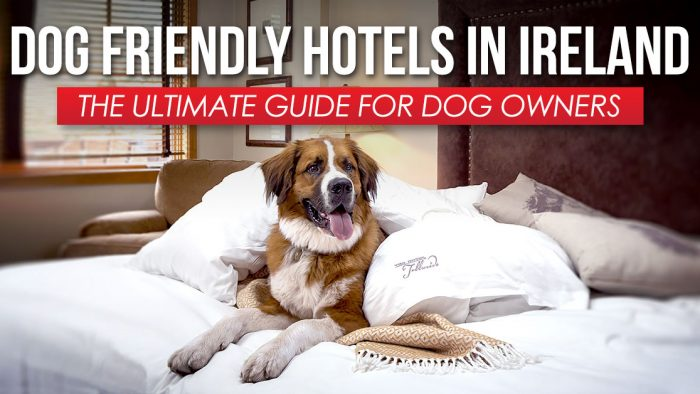 Dog Friendly Hotels Ireland