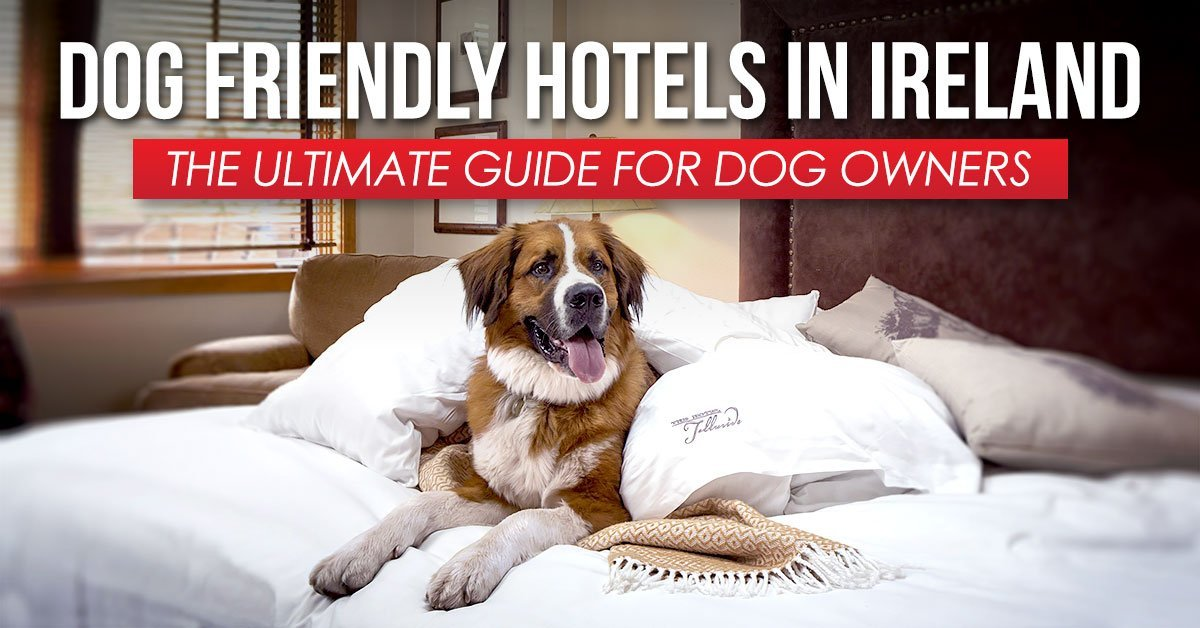Dog Friendly Hotels In Ireland The Ultimate Guide To Where Stay With Your