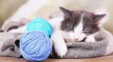 How Much Do Kittens Sleep