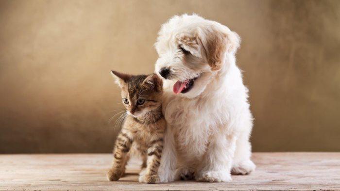Puppies Versus Kittens
