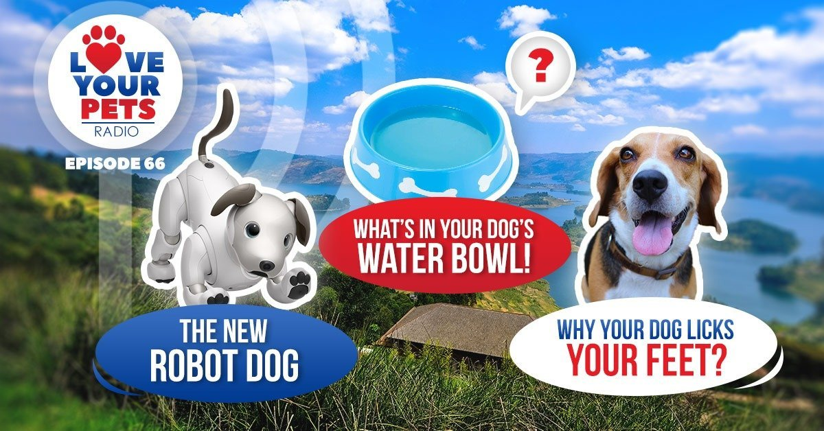 Why Does My Dog Lick My Feet? Robot Pets & Your Dog's Bowl
