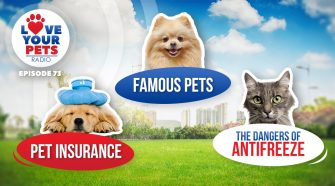 How to choose pet insurance