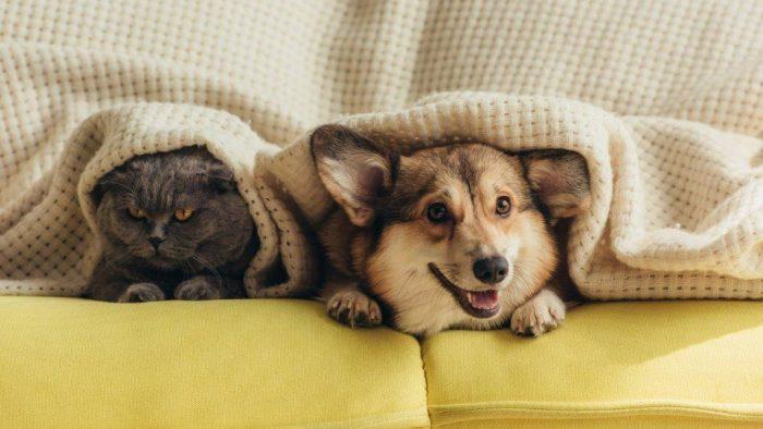 Pet Safe During Storm