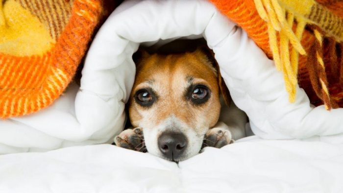 Can dogs get a cold