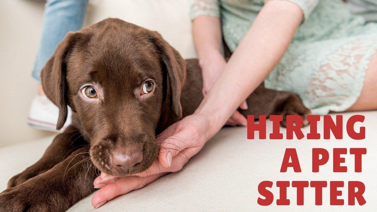 hire a pet sitter pet sitter cat sitter dog sitter dog minder