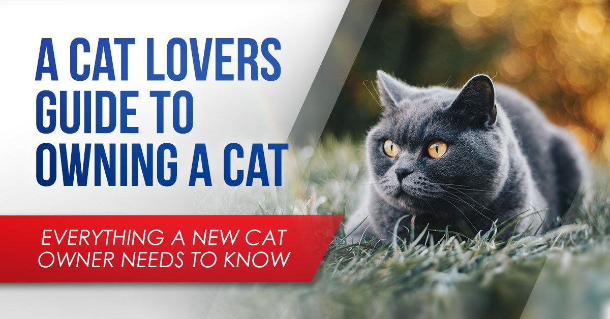 A Cat Lovers Guide To Owning A Cat