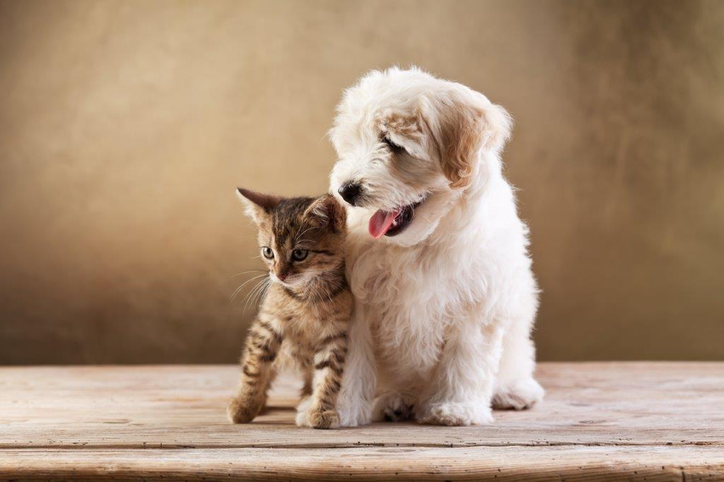 Pet Sitter Cost and Dog Walker Cost: Pet Sitters Ireland