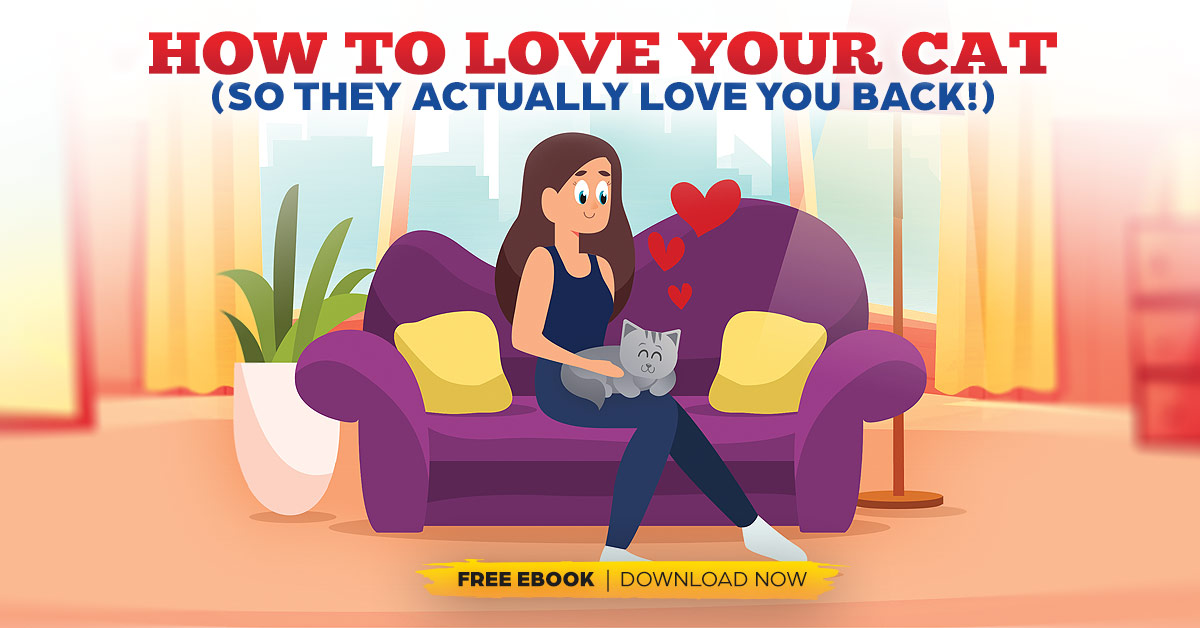 How to Love Your Cat (So They Actually Love You Back)