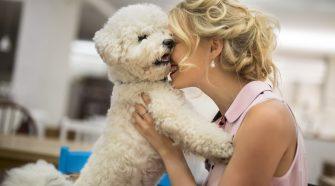 Reasons Love Dog More
