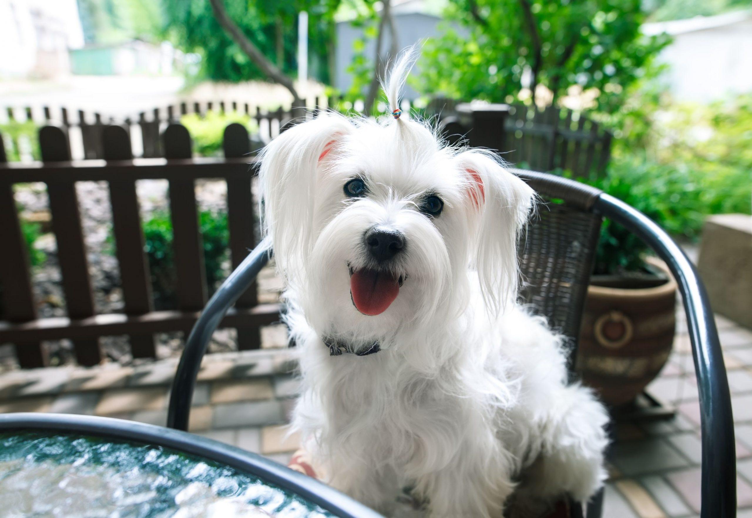 Dog At Cafe Dog Friendly Day